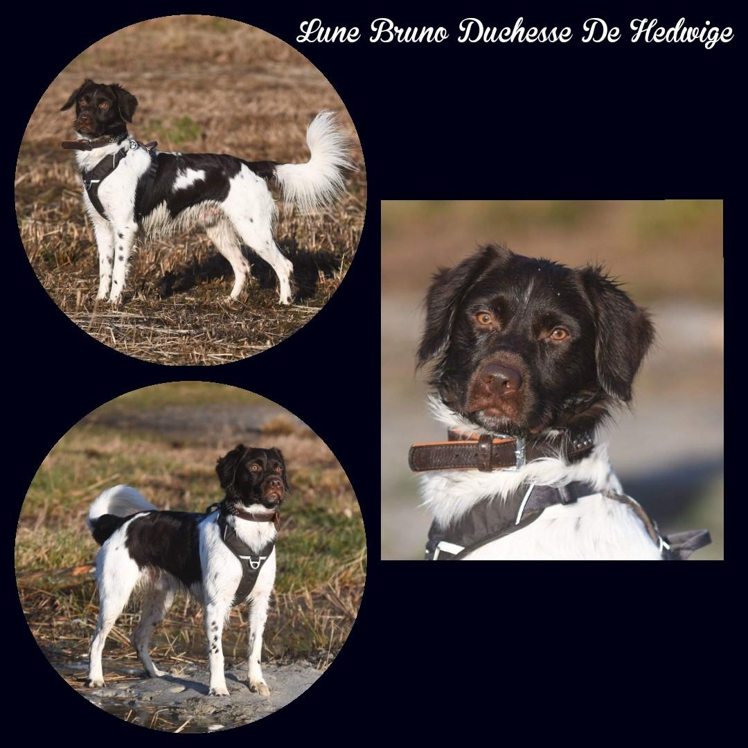 Lasco Bruno Duchesse Hedwige